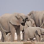 Fotoreise 2010 - Zweiländersafari Namibia und Botswana